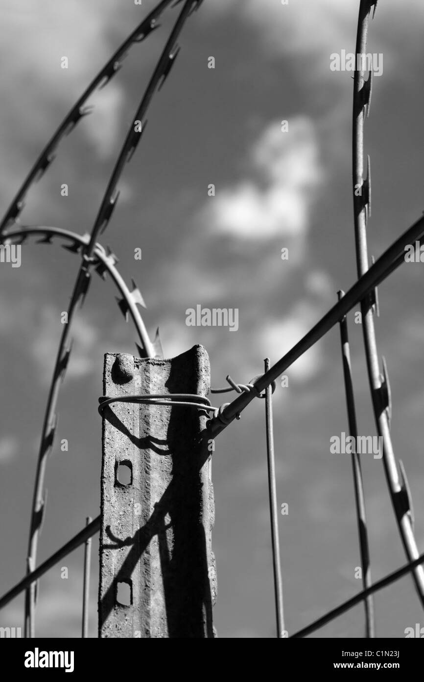 Coiled razor wire mounted on a boundary fence for security. Black and white. - Stock Image