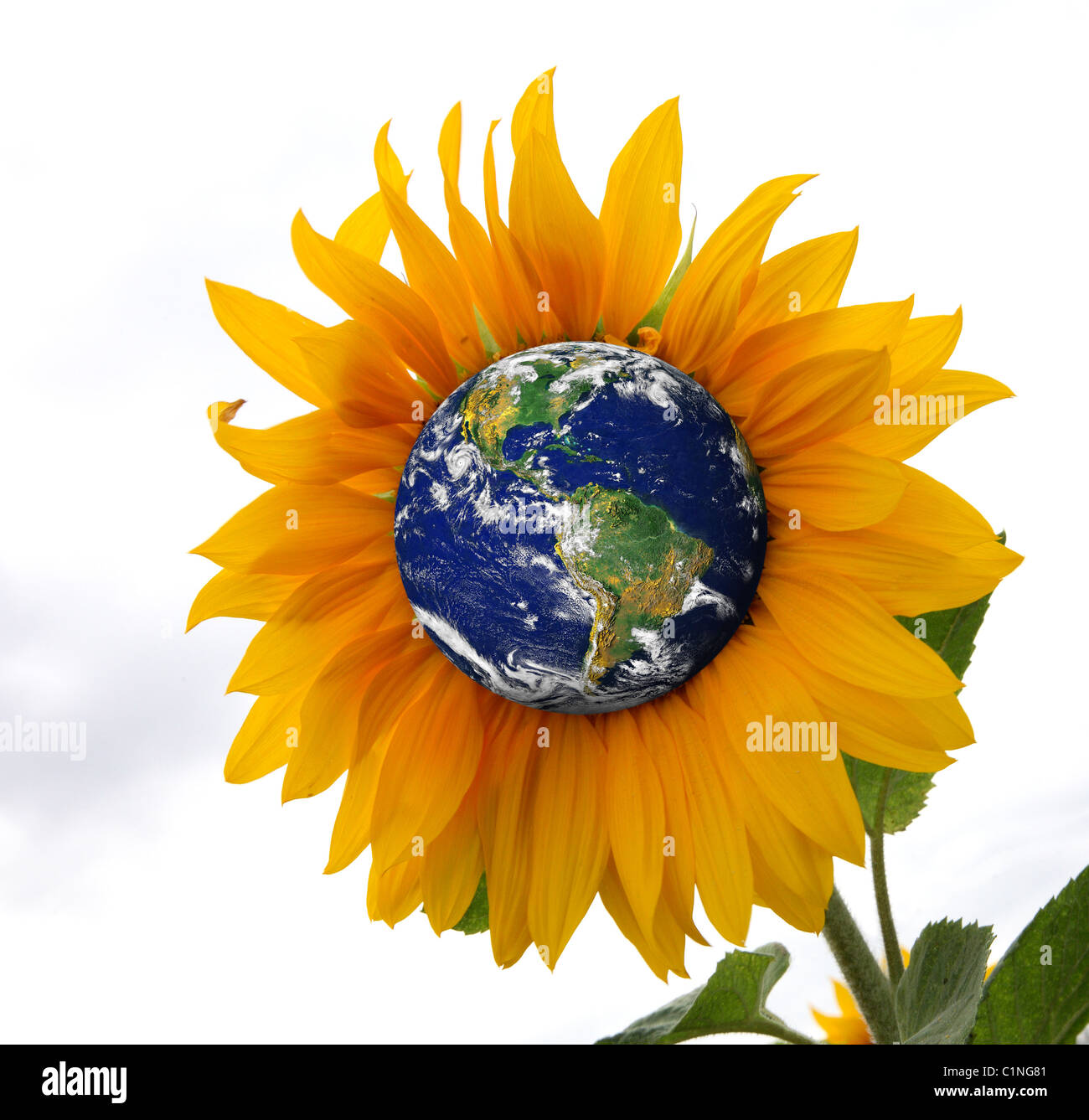Earth as a sunflower, representing the planet as a living organism. - Stock Image