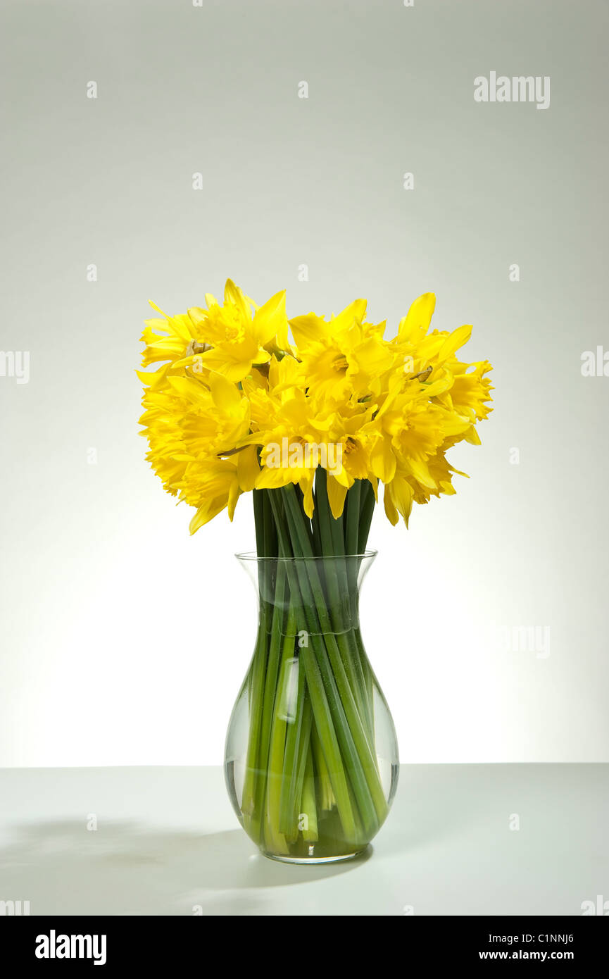 A bunch of spring daffodil flowers in a glass vase against a tone background - Stock Image