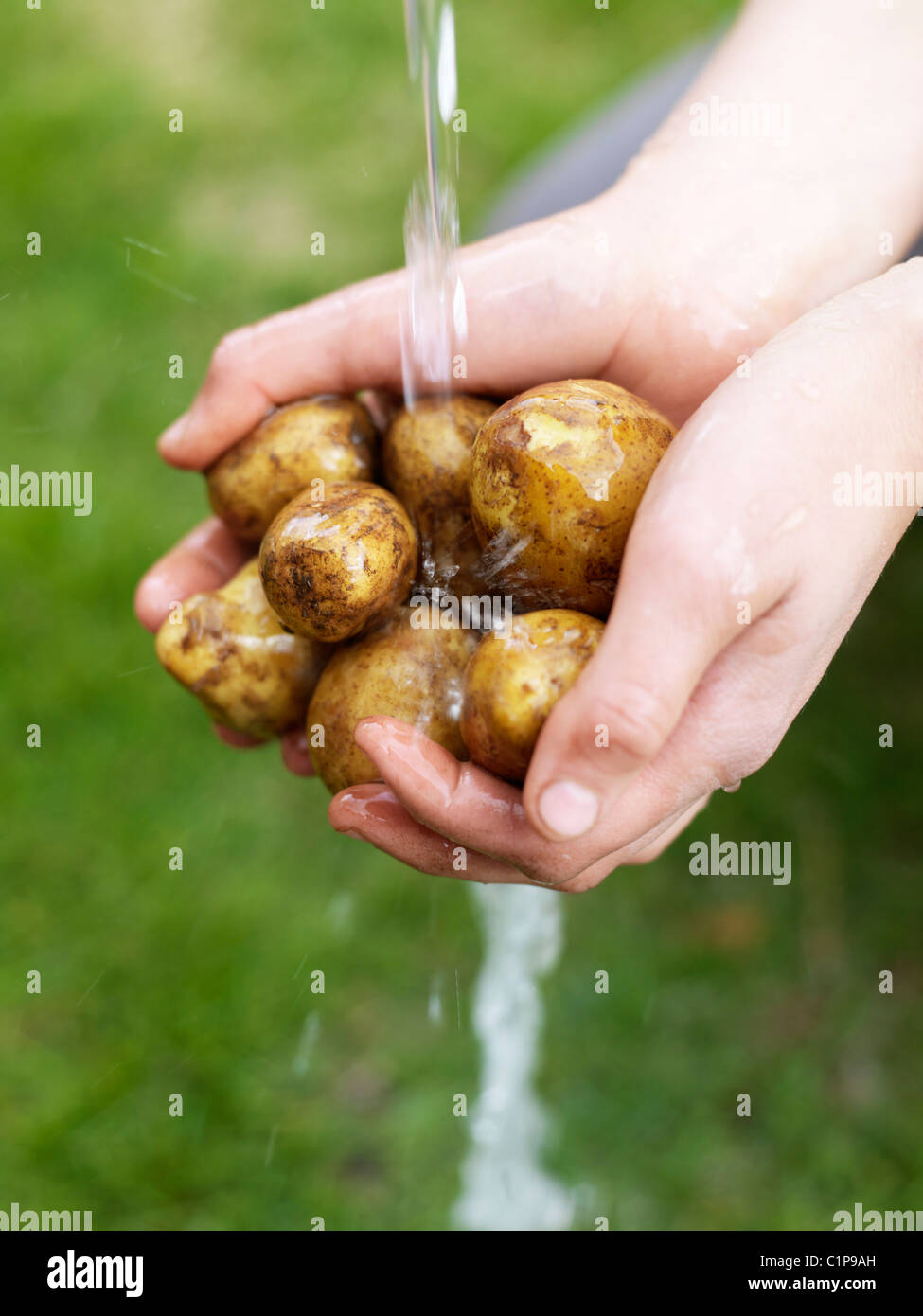 Womans hands washing potatoes under water - Stock Image