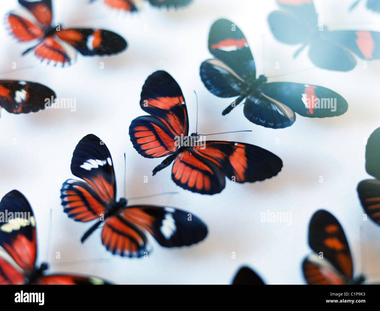 Butterfly collection - Stock Image