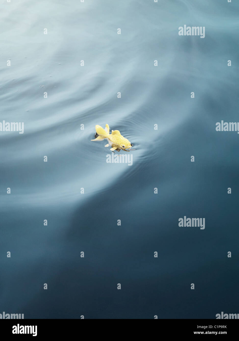 Toy fish swimming in water - Stock Image