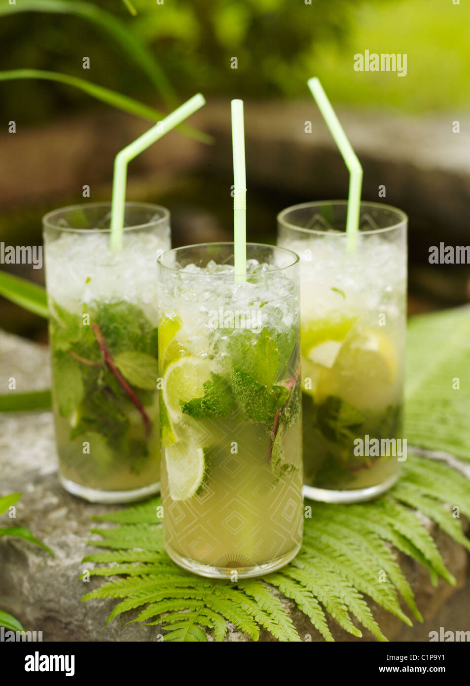Three mojito cocktails on fern - Stock Image