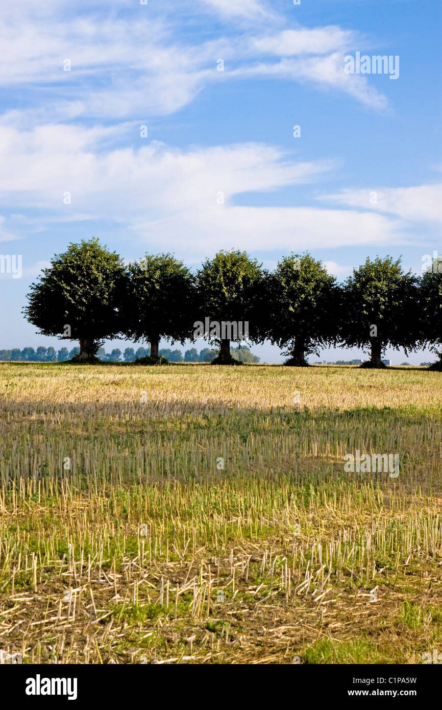 Germany, Wismar, Insel Poel, row of trees in countryside - Stock Image