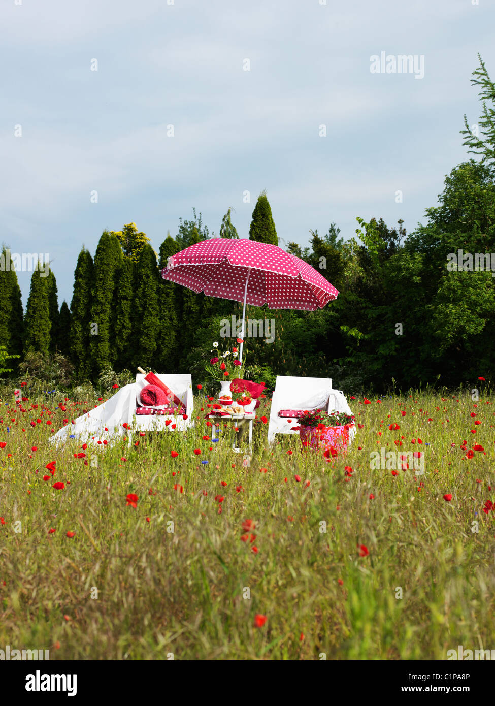 Couple of sun loungers and pink sunshade in field with poppies - Stock Image