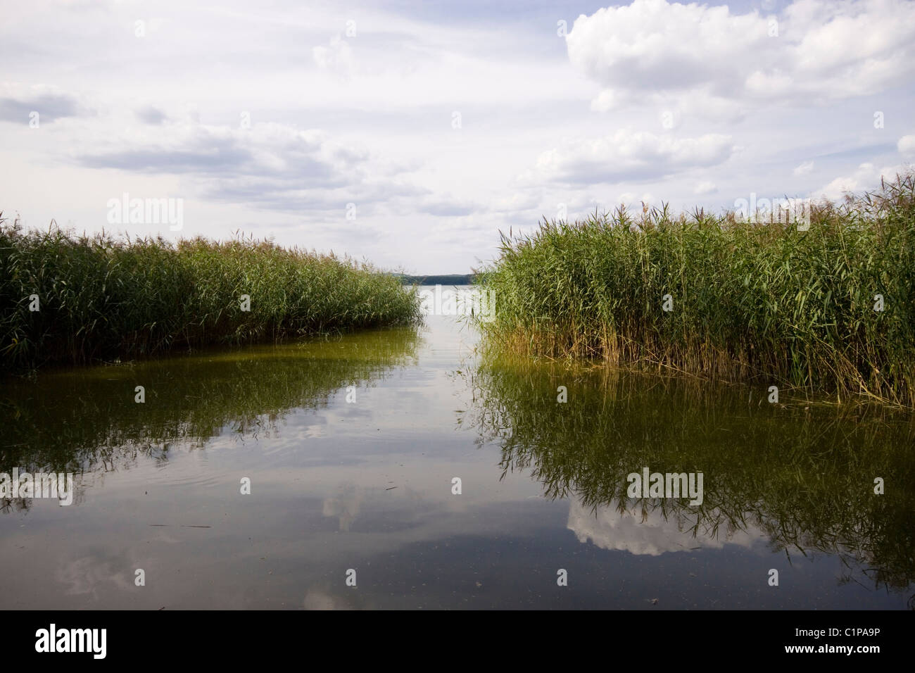 Germany, Landkreis Muritz, Muritzsee, reedbanks on lake - Stock Image