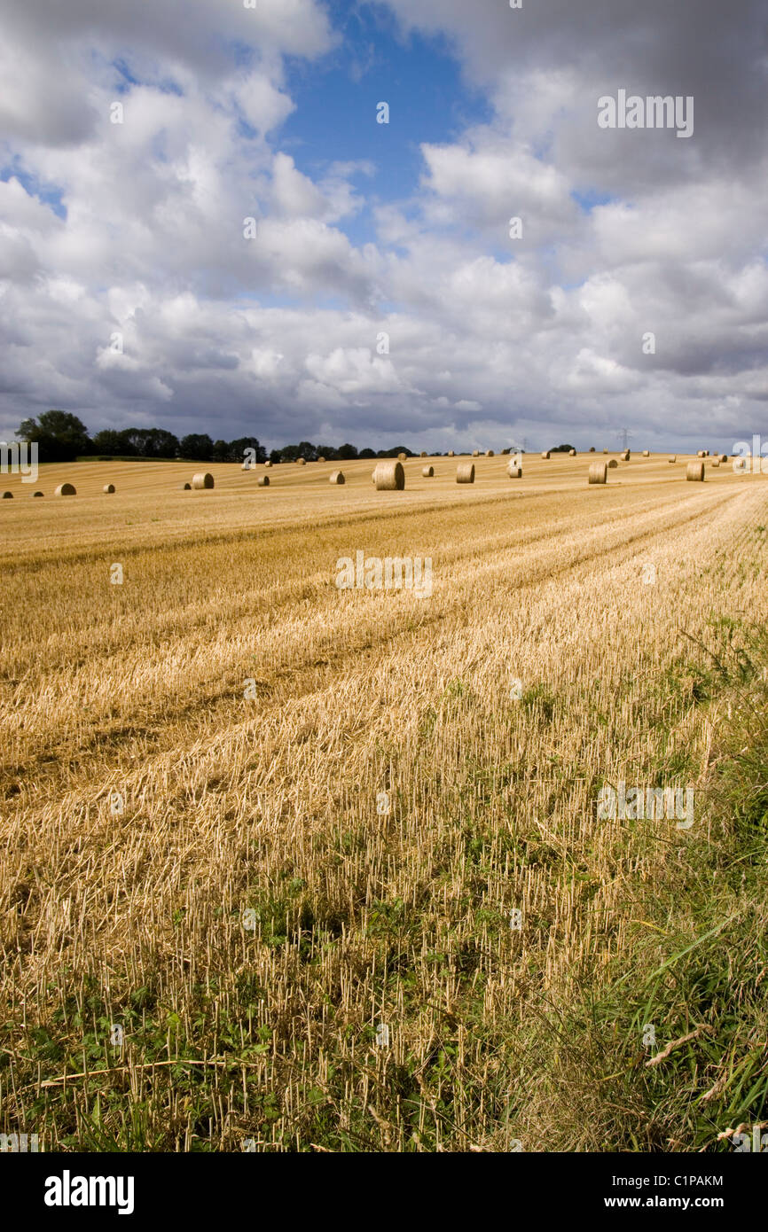 Germany, Fehmarn, hay bales in field - Stock Image