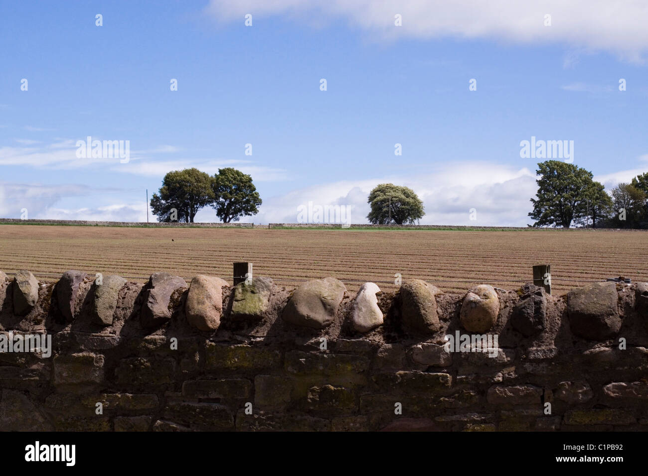 Scotland, Fife, trees, ploughed field and stone wall - Stock Image