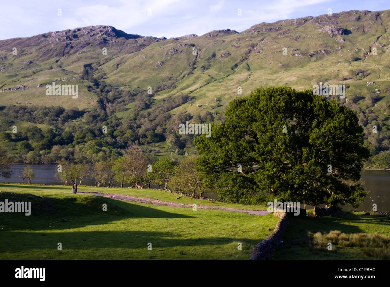 Scotland, Loch Lomond and Trossachs, oak tree and green mountains in countryside - Stock Image