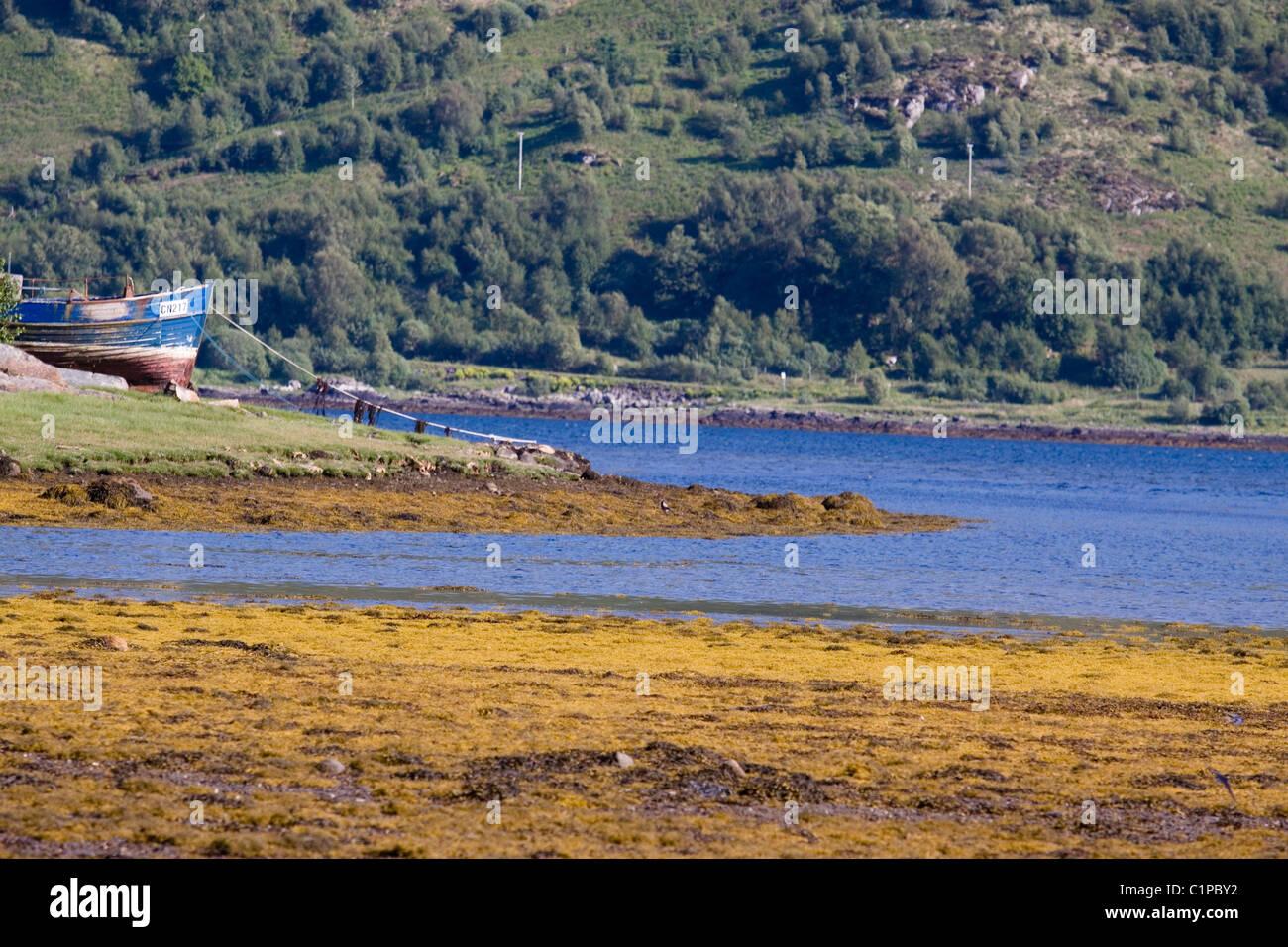 Scotland, Strontian, fishing boat moored on shoreline - Stock Image