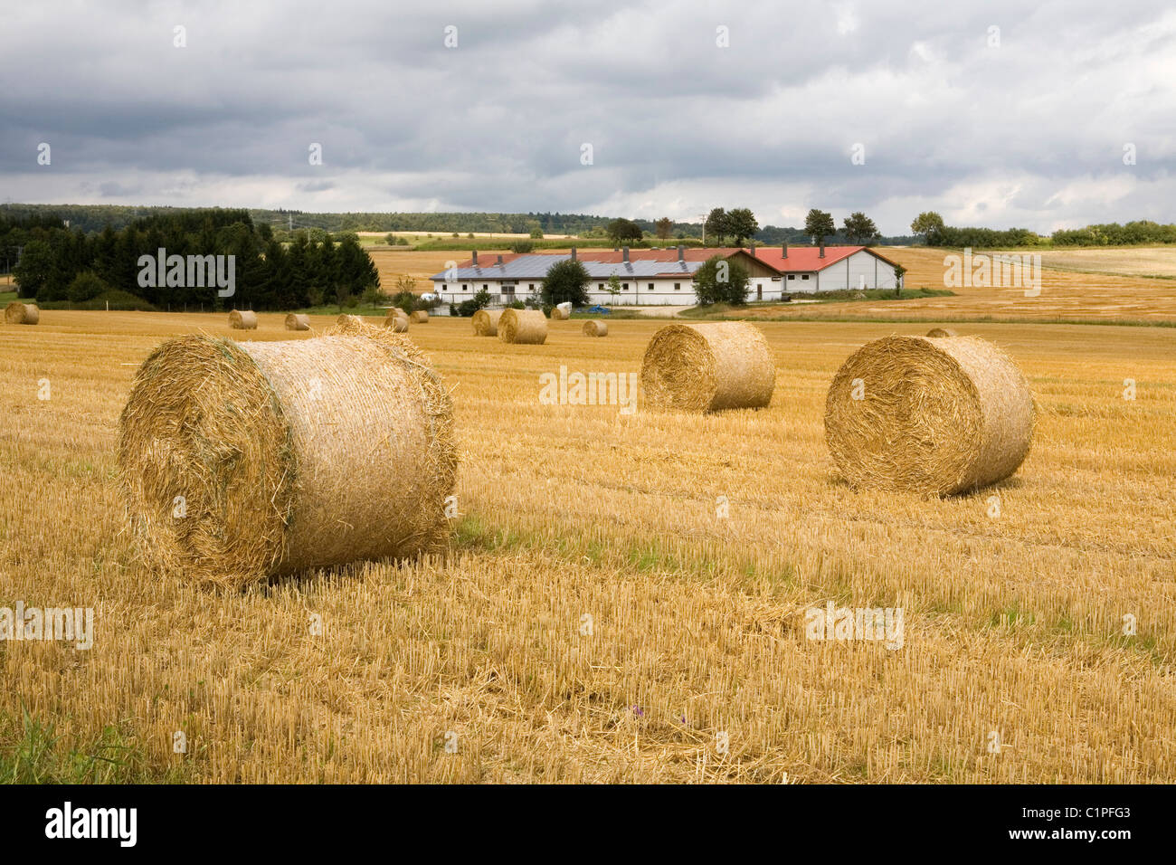 Germany, Bavaria, hay bales in field - Stock Image