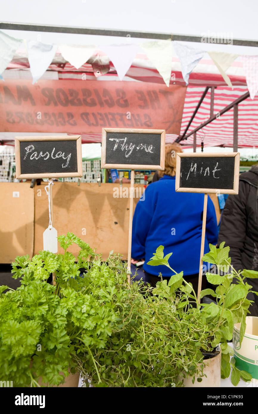 England, Derbyshire, Ashbourne, herb plants on market stall - Stock Image