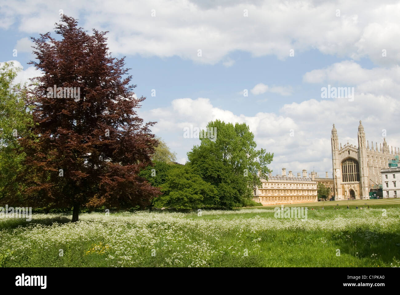 England, Cambridgeshire, Cambridge, King's College Chapel - Stock Image