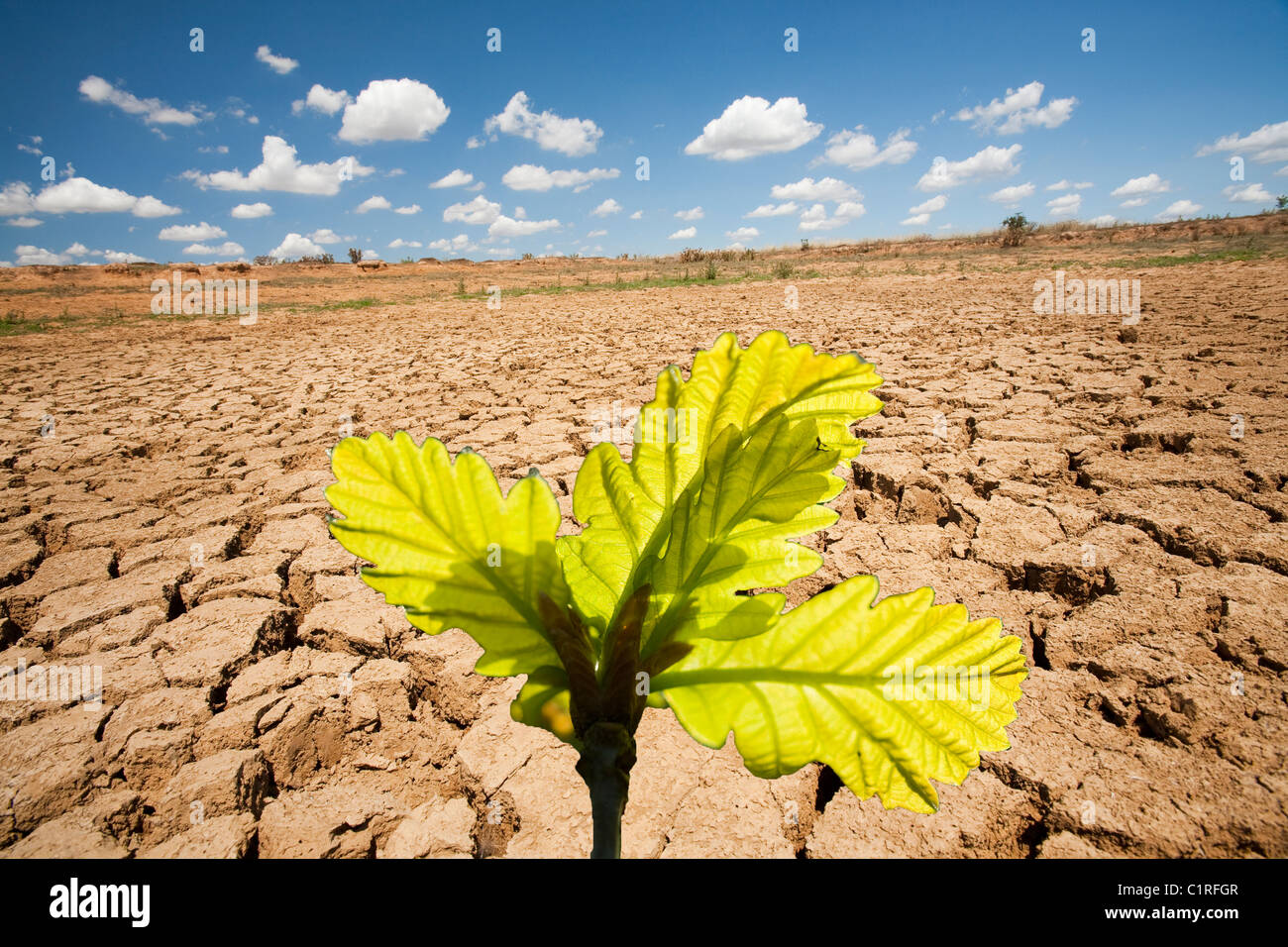 A farmers watering hole on a farm near Shepperton, Victoria, Australia, totally dried up, with Oak leaves - Stock Image