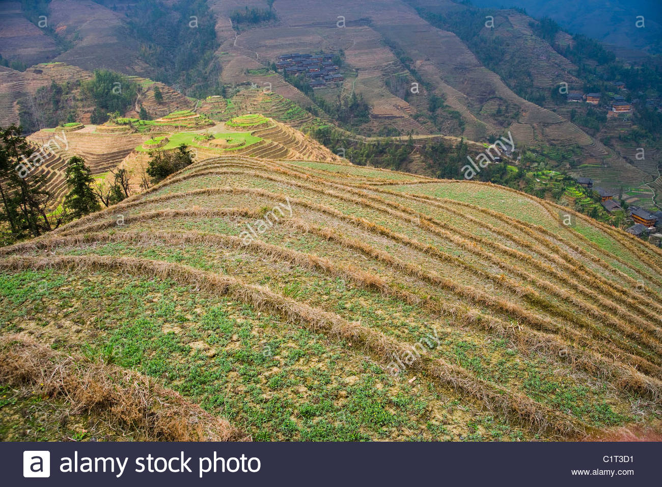 Dragons Backbone Rice Terraces, Longji Titian, Guilin, Guangxi, China - Stock Image