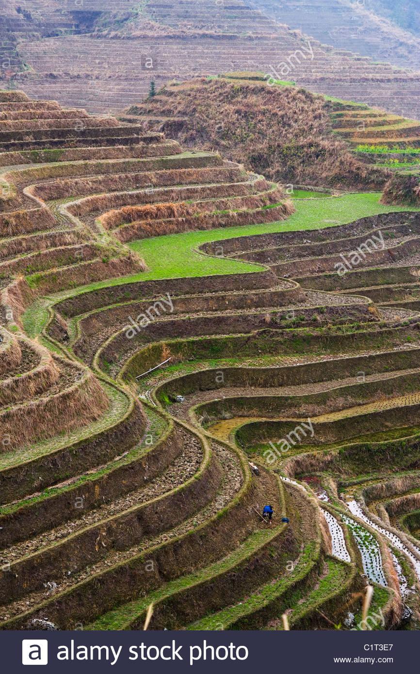 Dragons Backbone Rice Terraces, Longji Titian, Guilin, Guangxi, China - Stock Image