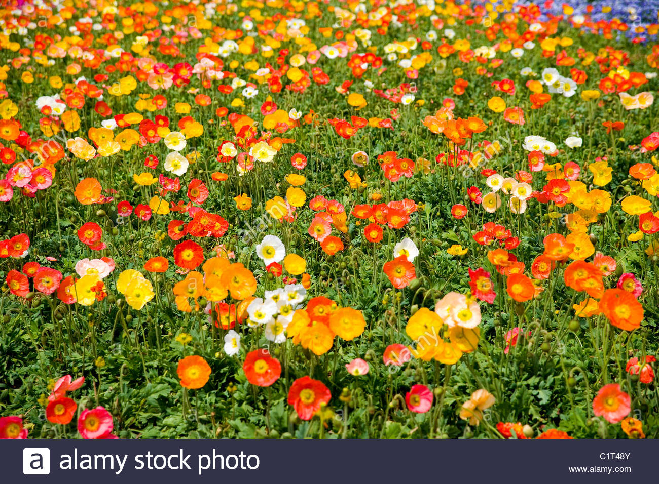 World Horticultural Expo Garden, Kunming, Yunnan, China Stock Photo