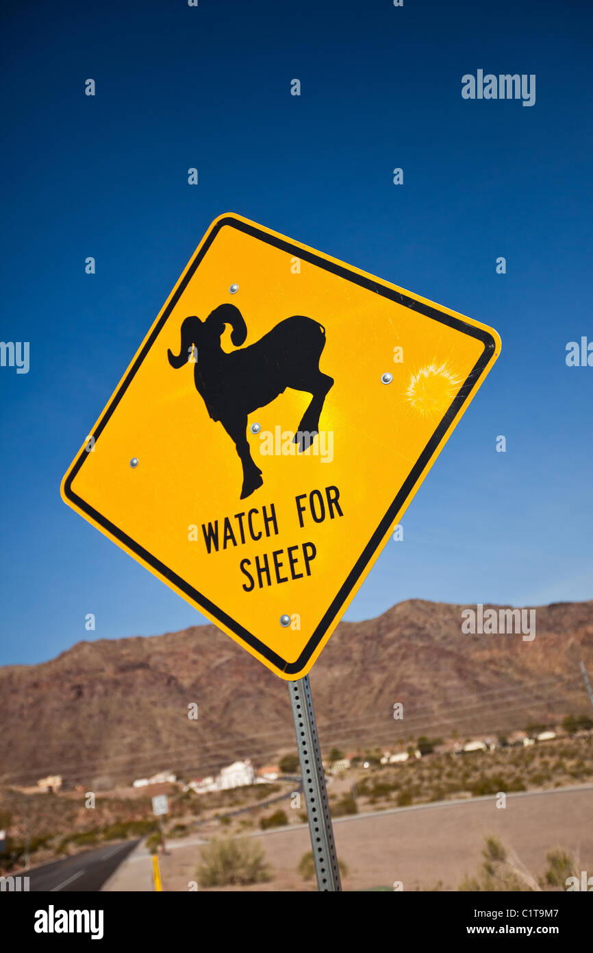 Sign warning motorists of Big Horn Sheep on road Boulder City, NV. - Stock Image