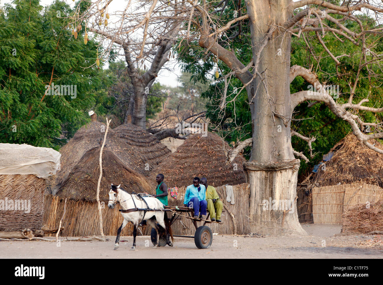 horse and cart in the thatched circular huts village of Farar, Senegal, Africa - Stock Image
