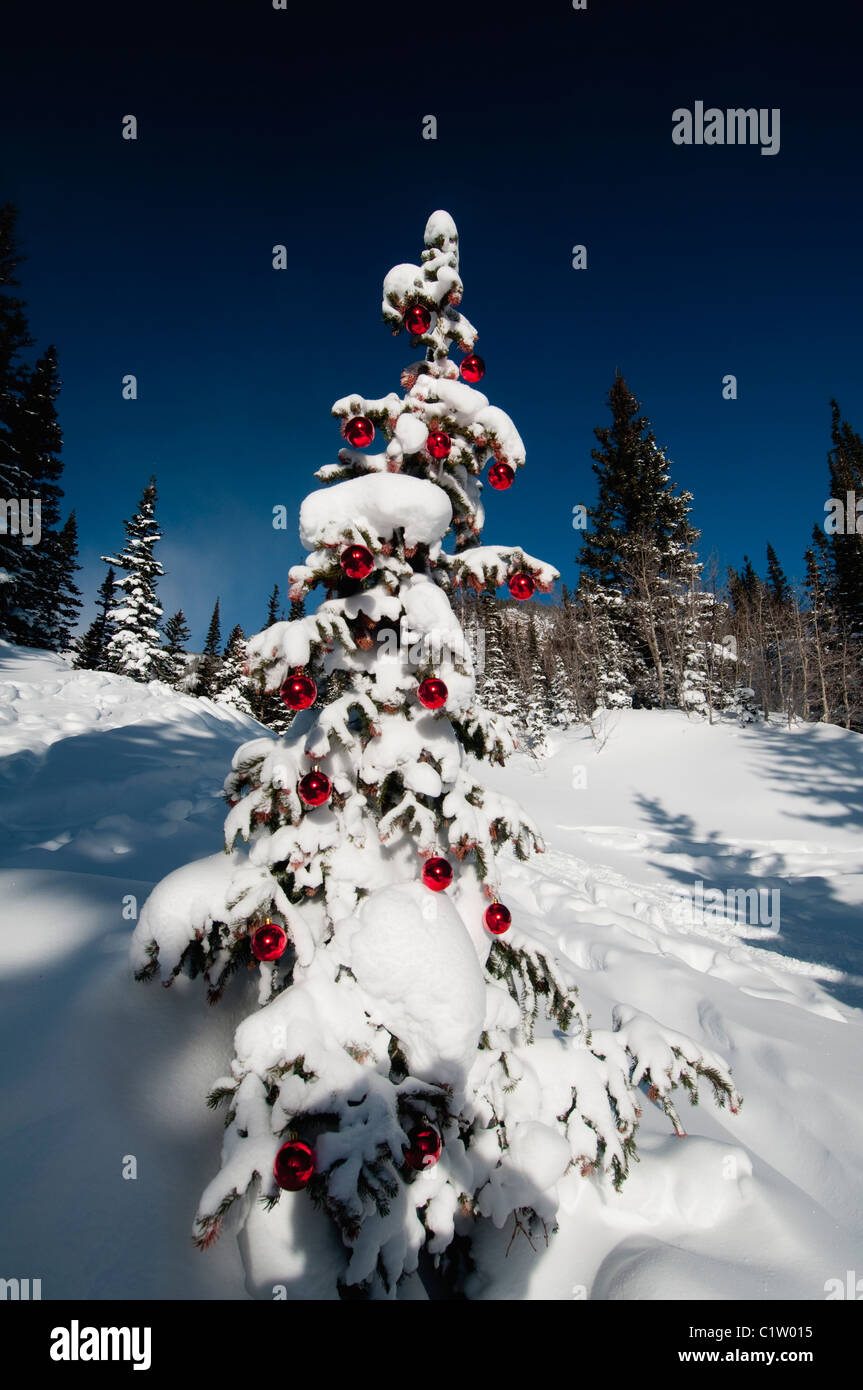 Christmas In Colorado Mountains.Low Angle View Of A Snow Covered Christmas Tree Dream Lake
