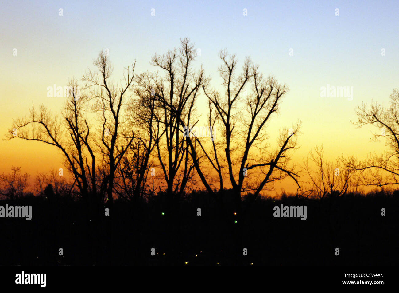 Arkansas Sunset with tall black silhouetted trees centered in the image.  A blue and orange sky provides great contrast. - Stock Image