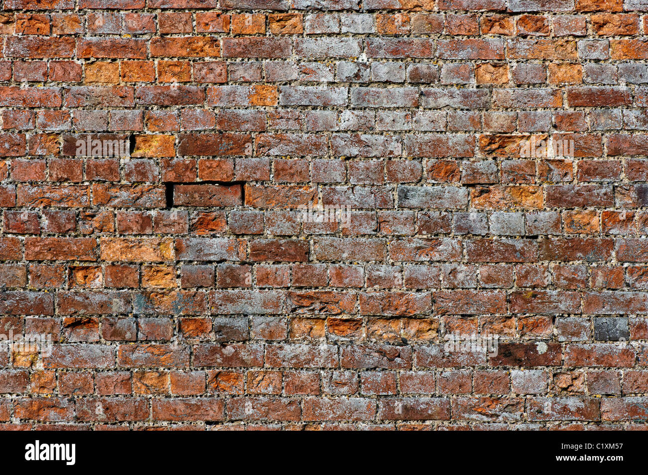 Old garden brick wall - Stock Image