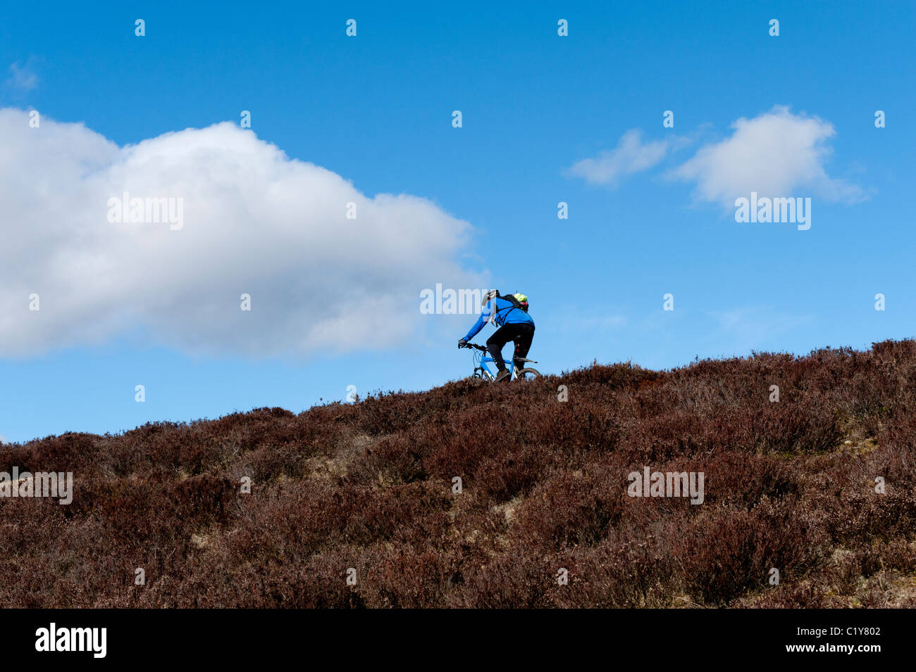Mountain biker on C2C route in North Pennines - Stock Image