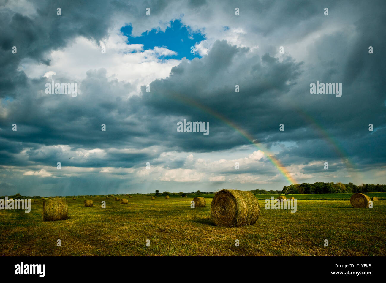 A field of round bails with a brilyent sky - Stock Image