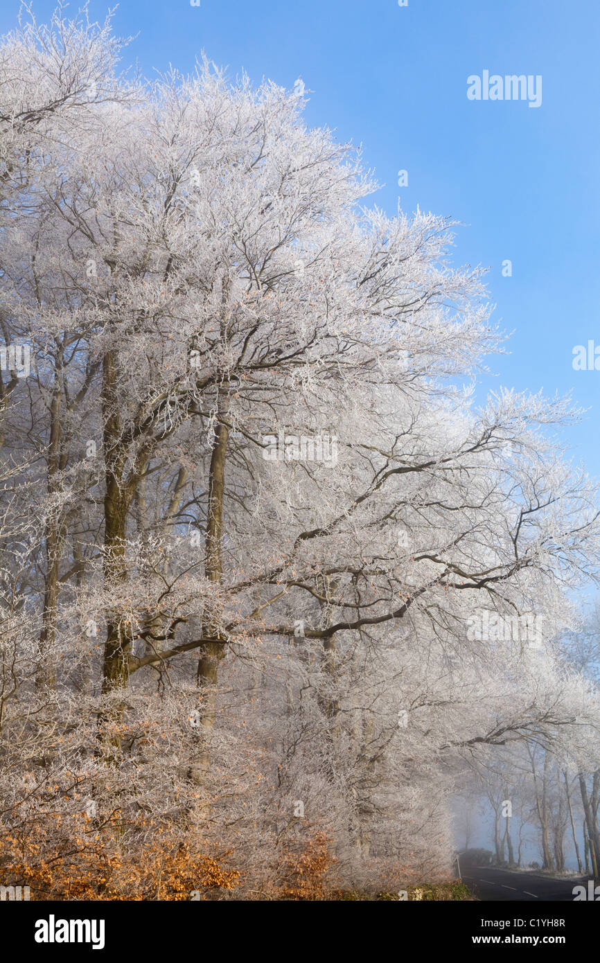 Hoar frost and mist in winter on the lane across Scottsquar Hill in the Cotswolds at Edge, Gloucestershire, England, - Stock Image