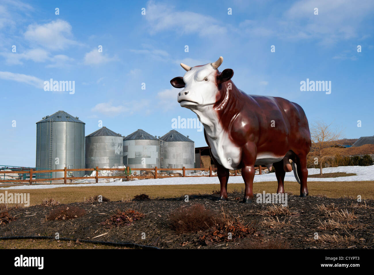 Fake life size bull on the grounds of a cattle breeding farm near St-Augustin, Province of Quebec, Canada. - Stock Image