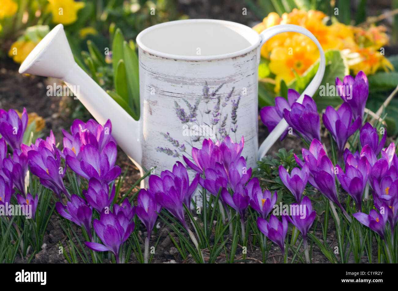 Watering can in the garden among the spring flowers. - Stock Image