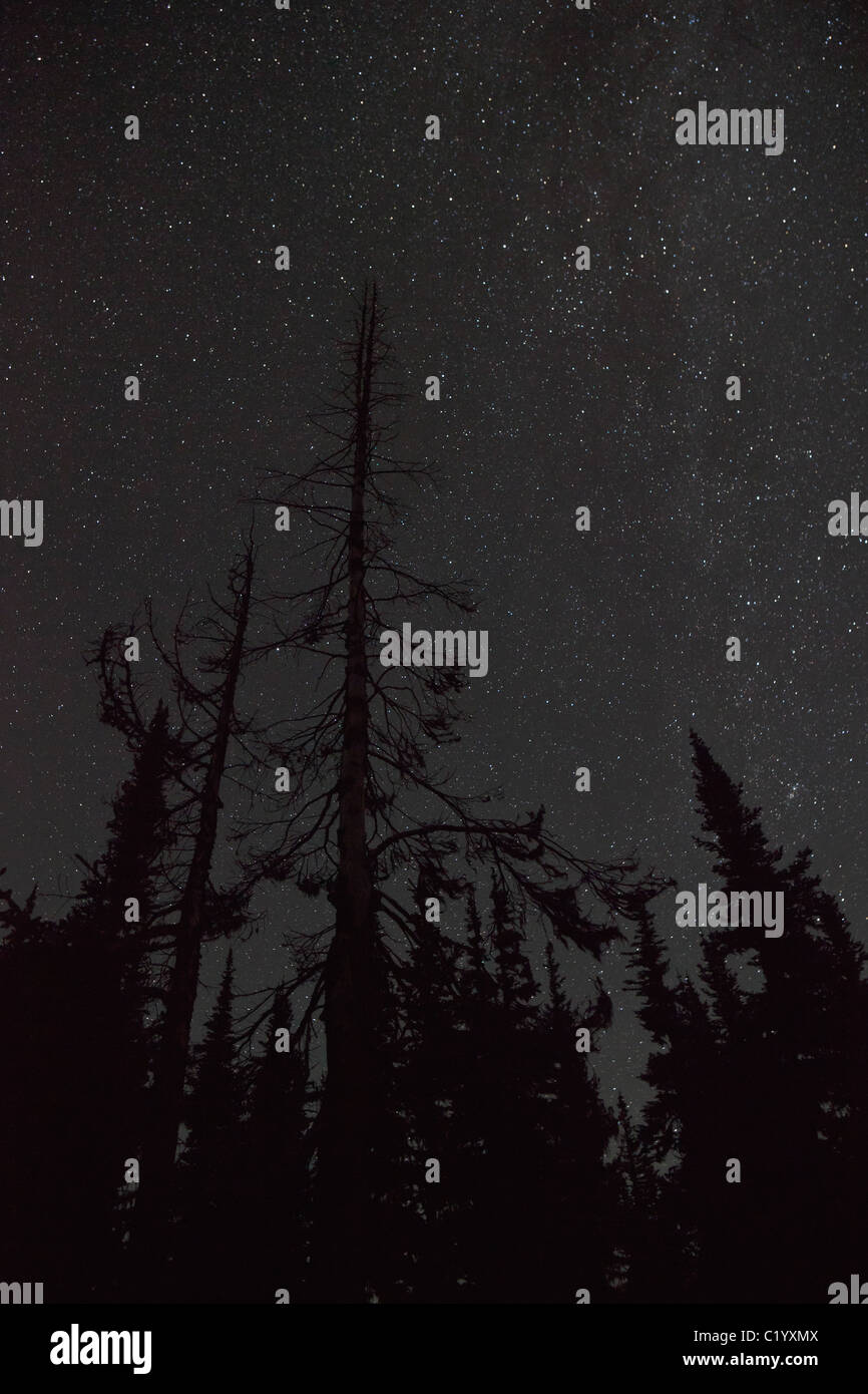A starry sky with silhouetted trees in the North Cascades, Washington, USA. - Stock Image