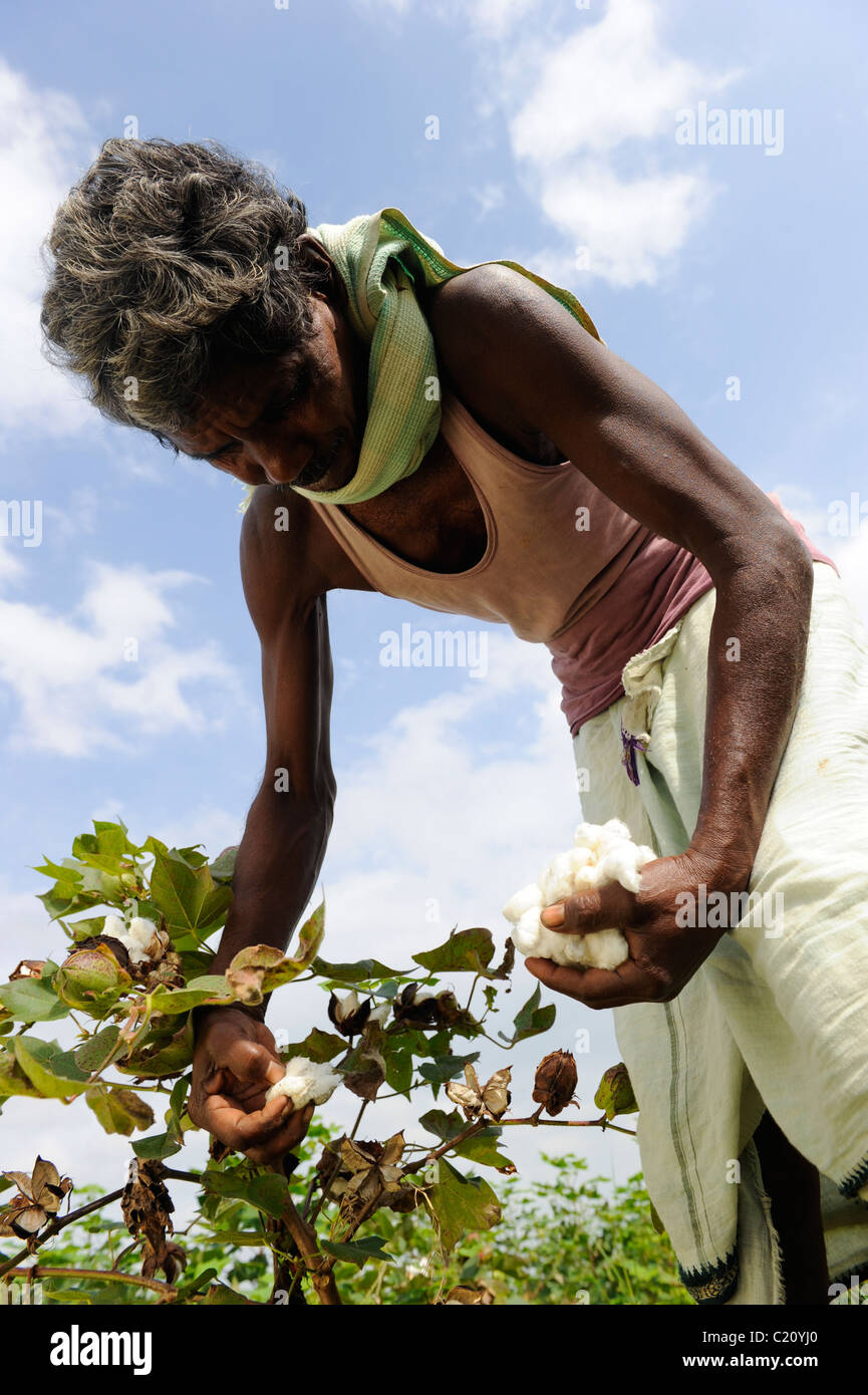 India Orissa , fair trade and organic cotton farmers of Agrocel cooperative near Rayagada - Stock Image