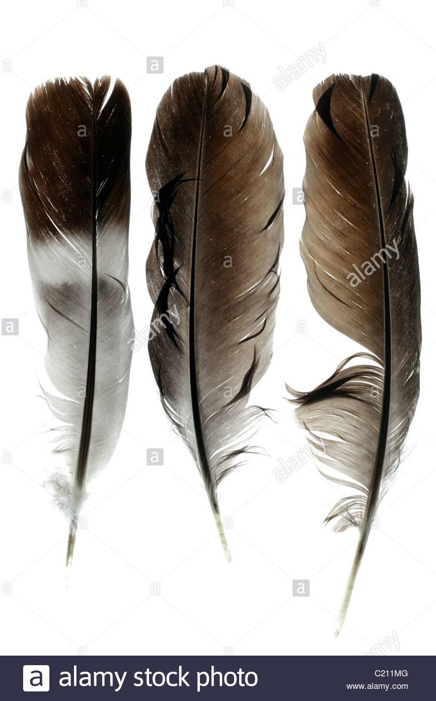 three different bird feathers - Stock Image