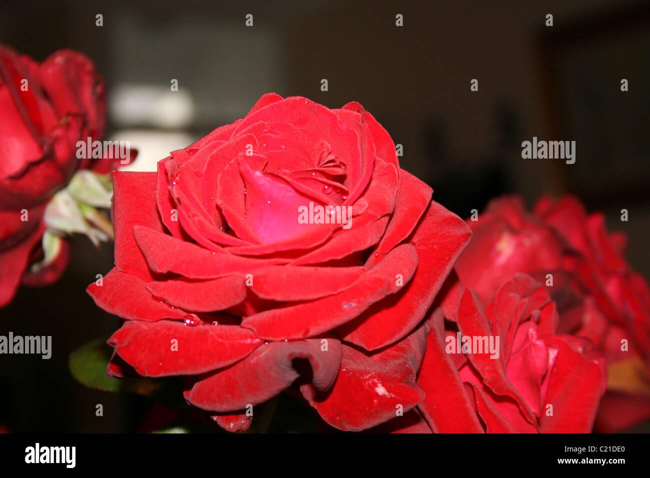 8744615312901f Velvet Red Stock Photos   Velvet Red Stock Images - Alamy