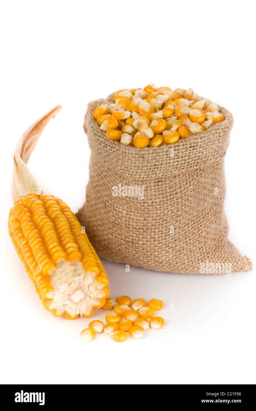 Corn in small burlap sack - Stock Image