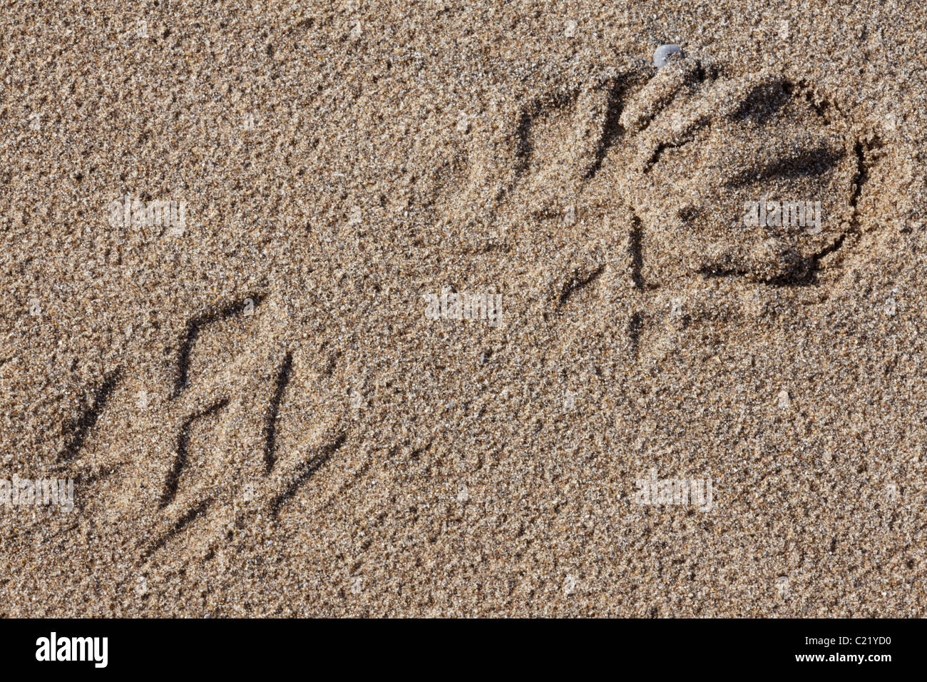 Shoe imprint in the sand on a beach, Wales, United Kingdom - Stock Image