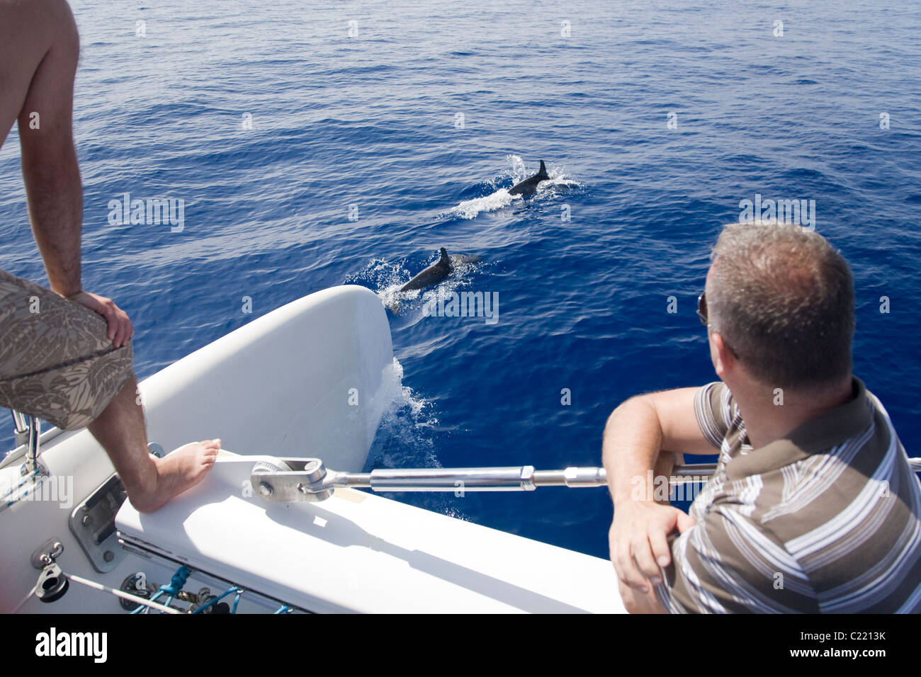 People watching dolphins surface in front of a catamaran off Funchal, Madeira, during a dolphin watching excursion. - Stock Image