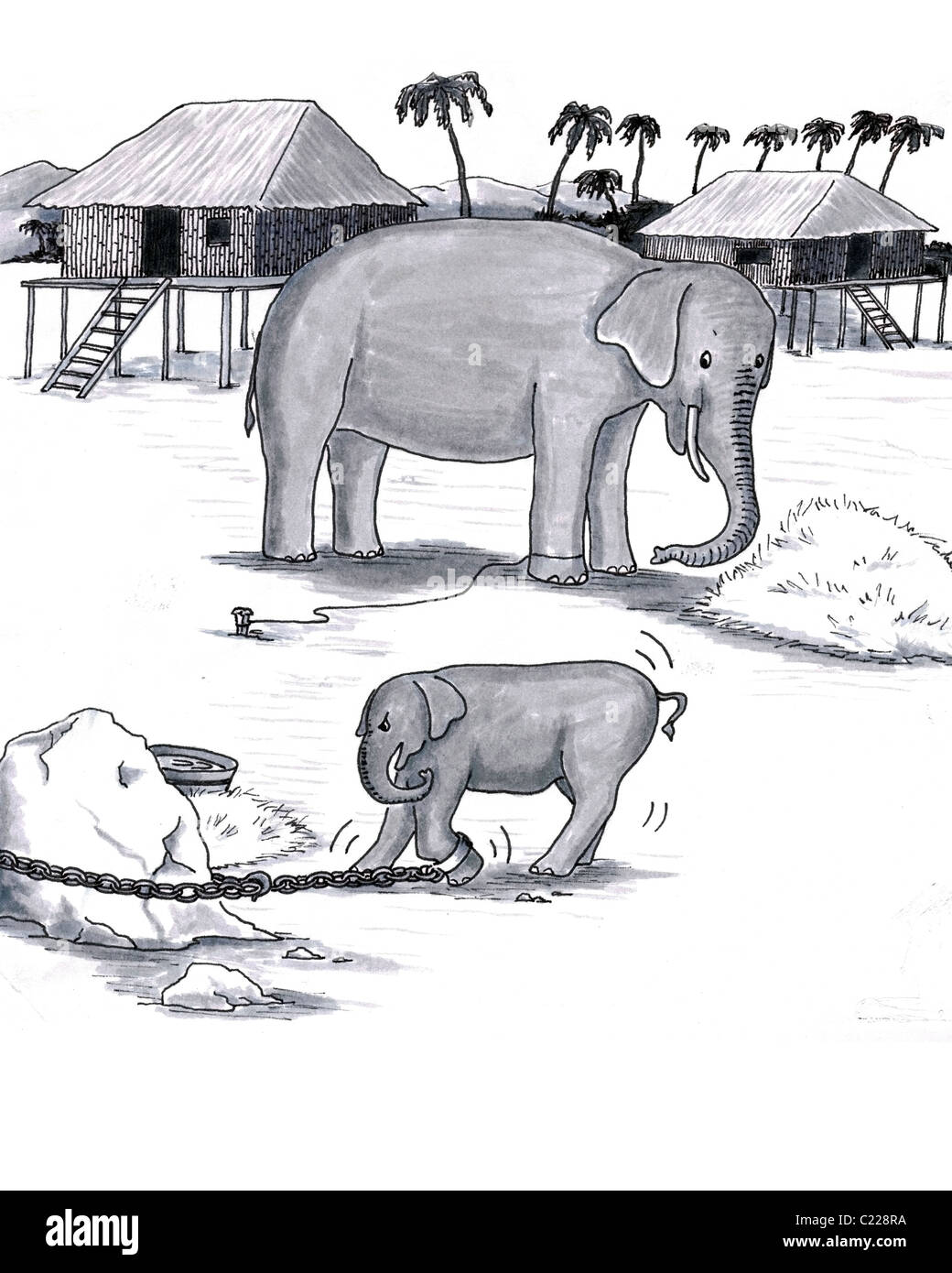 Older and younger pachyderm; baby attached to heavy chain, adult trained to stay with just rope. Hand drawn art - Stock Image