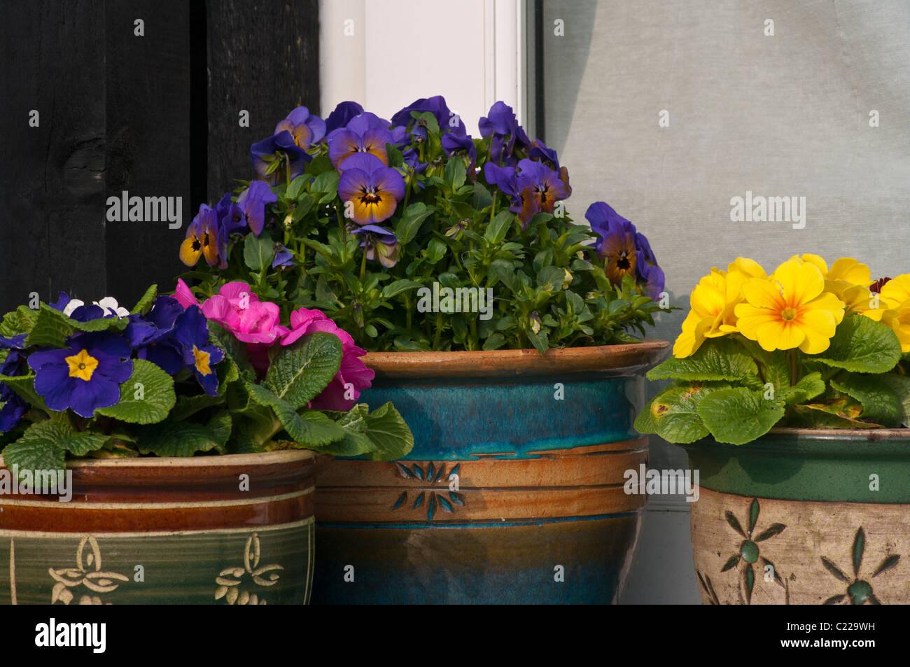 Bedding Plants In Decorative Garden Pots