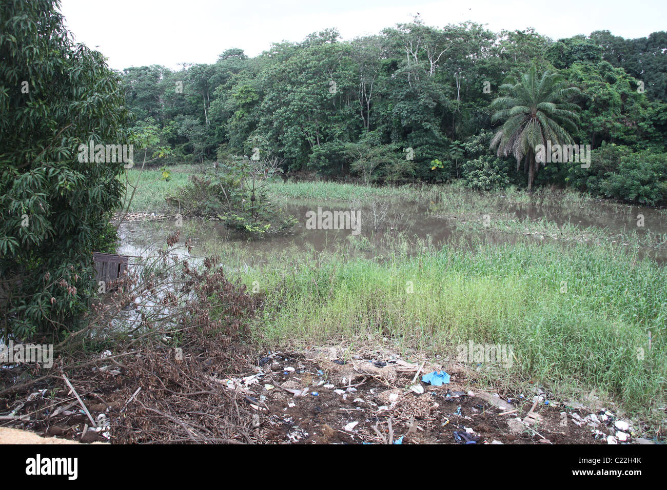 Polluted River in the Amazon - Stock Image