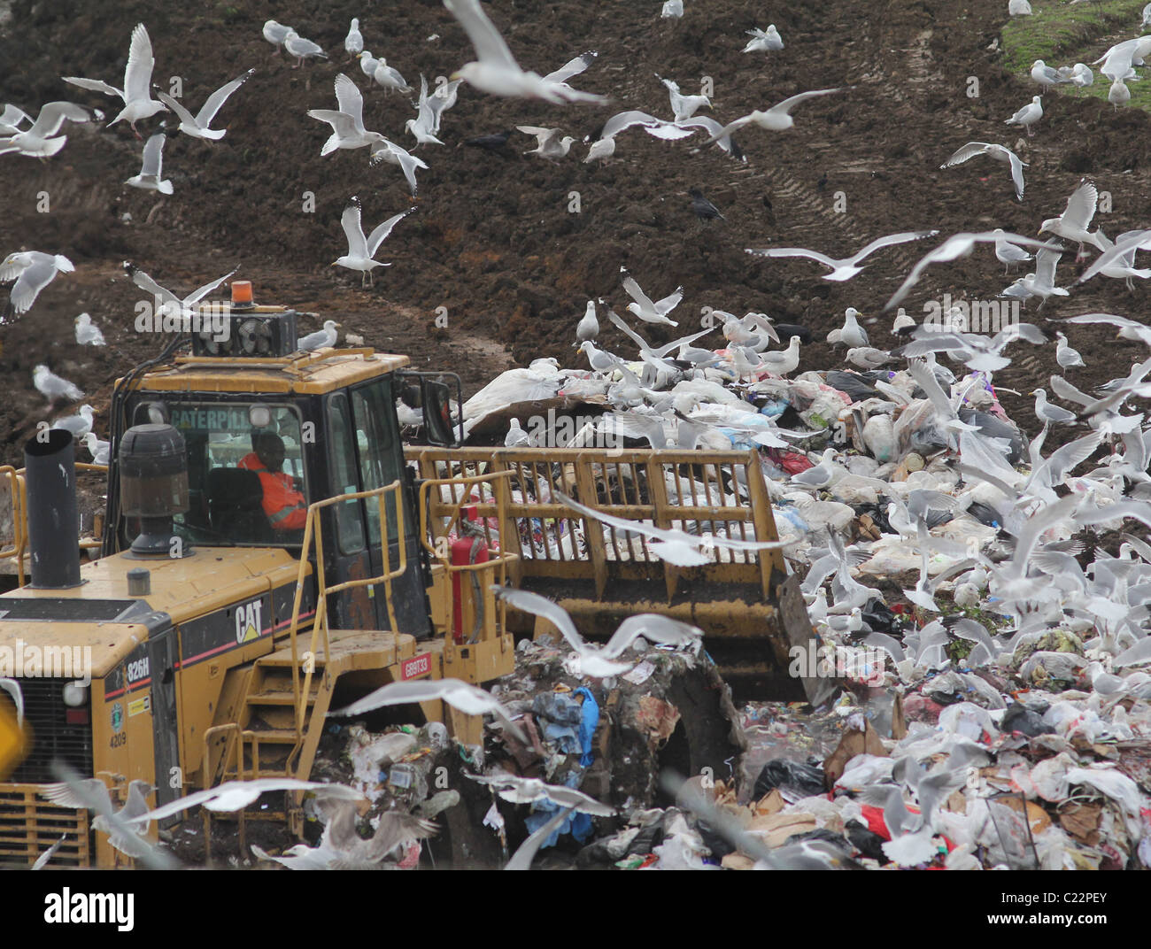 bulldozer landfill gulls Palo Alto Baylands Park California - Stock Image