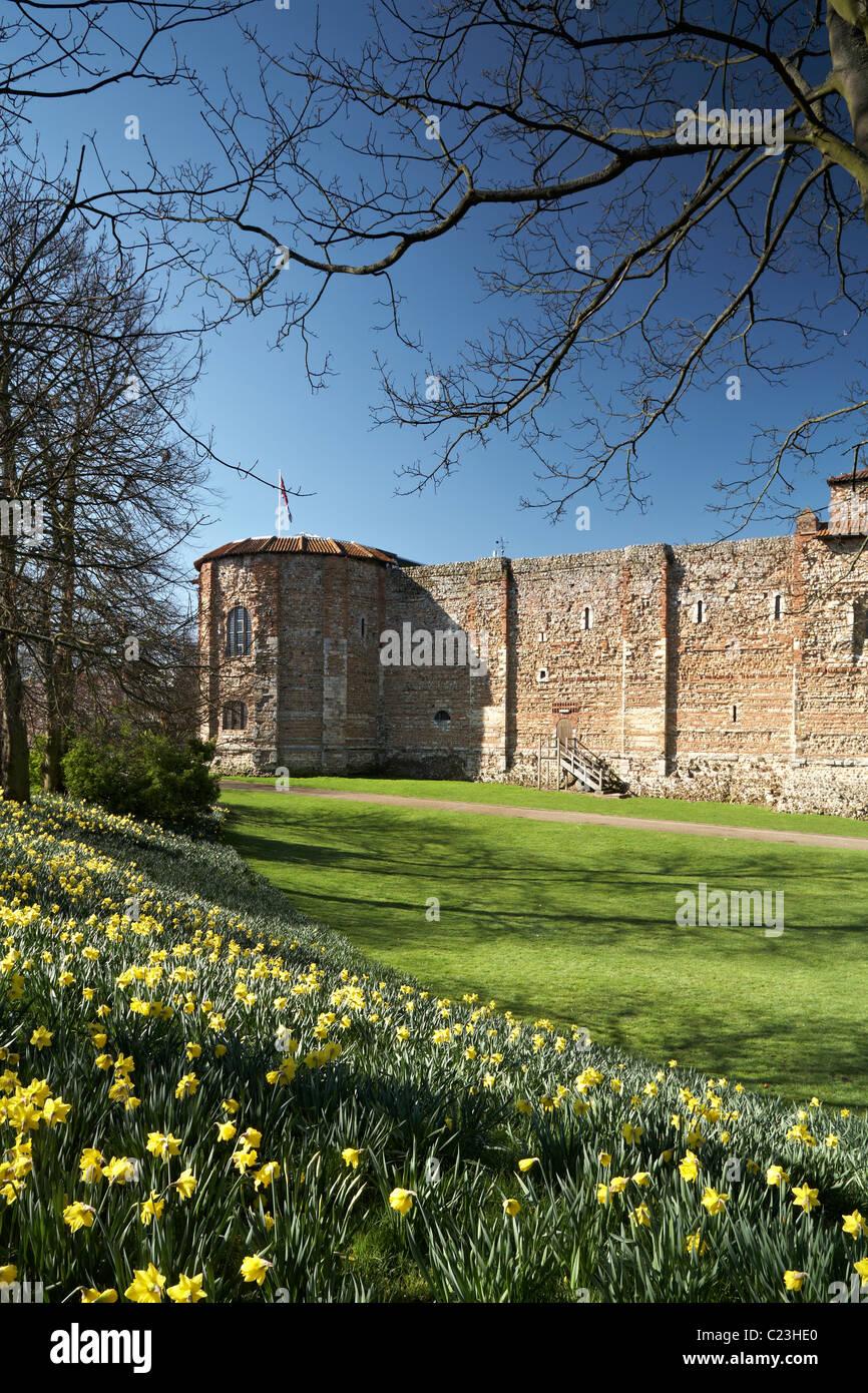 Colchester Castle Museum Springtime Upper Castle Park Essex - Stock Image