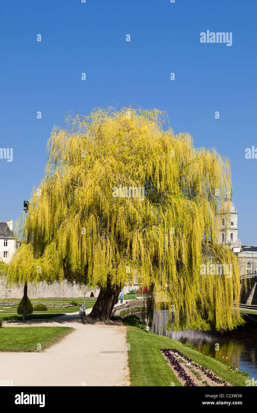 Weeping Willow tree in an urban park, France, Europe Stock Photo