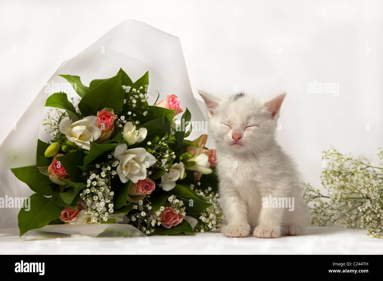 cute sleeping white kitten with bouquet - Stock Image
