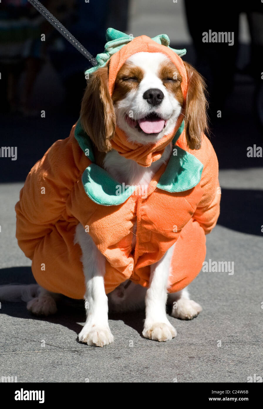 dogs participate in a dog halloween costume contest at the grove shopping mall in hollywood los angeles california 311009