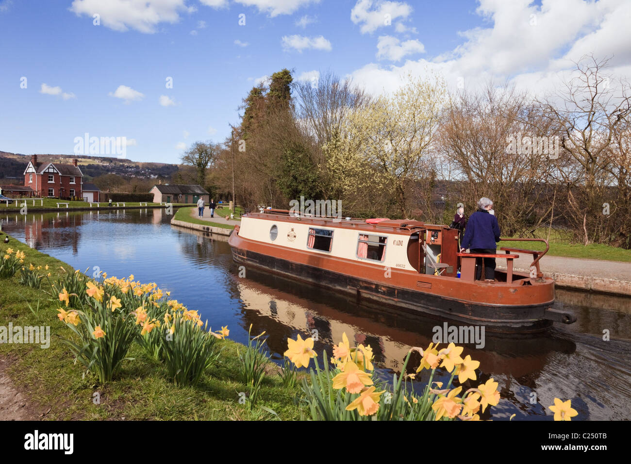Narrowboat sailing on the Llangollen canal with daffodils in spring. Froncysyllte, Wrexham, North Wales, UK, Britain. - Stock Image