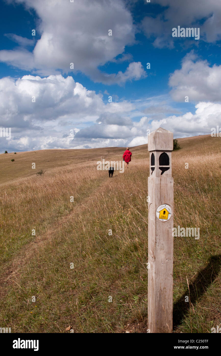 A woman and her dog walking on the Cotswold Way long distance footpath on Selsley Common near Stroud, Gloucestershire, Stock Photo