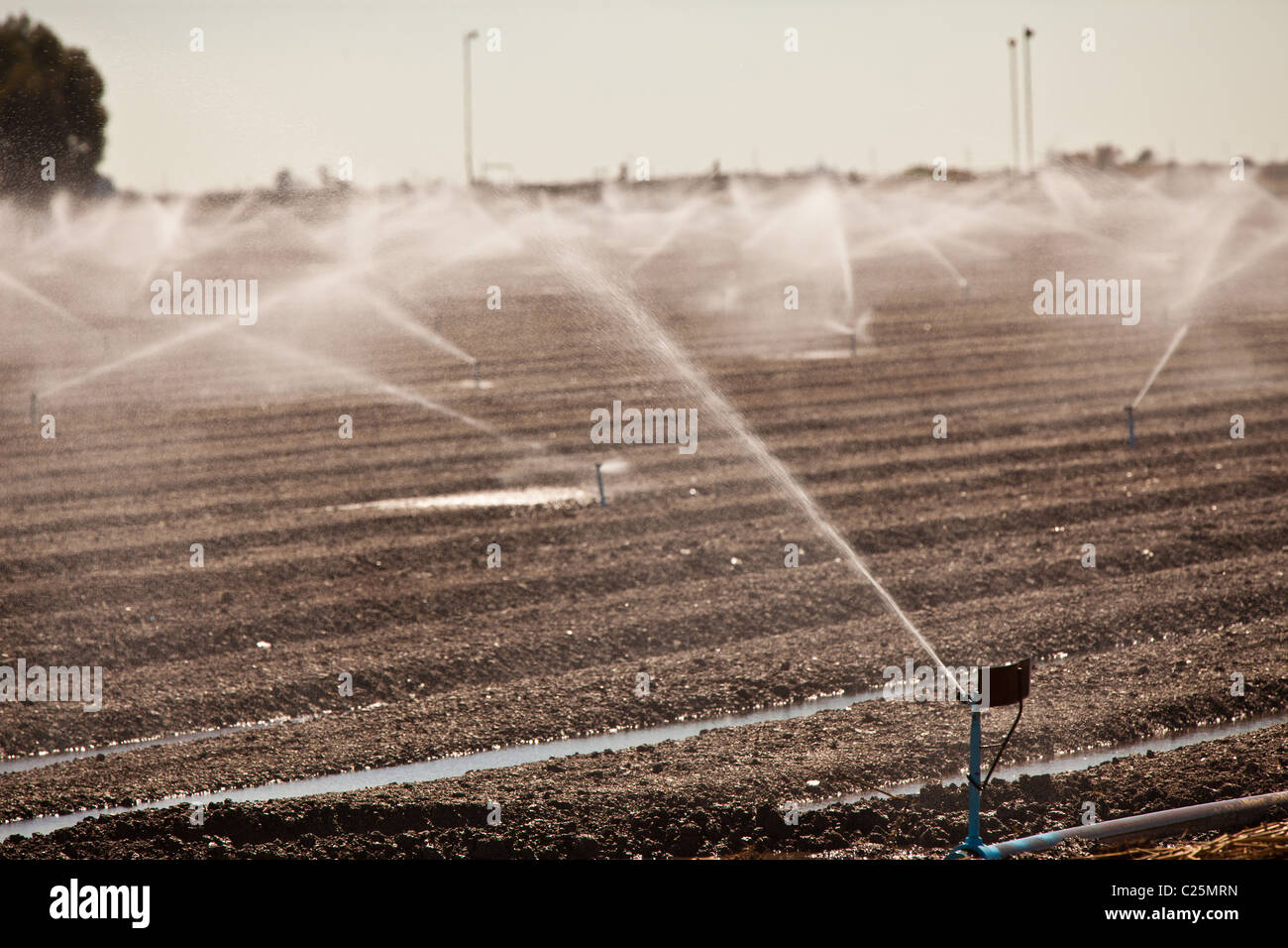 Freshly planted field being irrigated in the Imperial Valley Niland, CA. - Stock Image