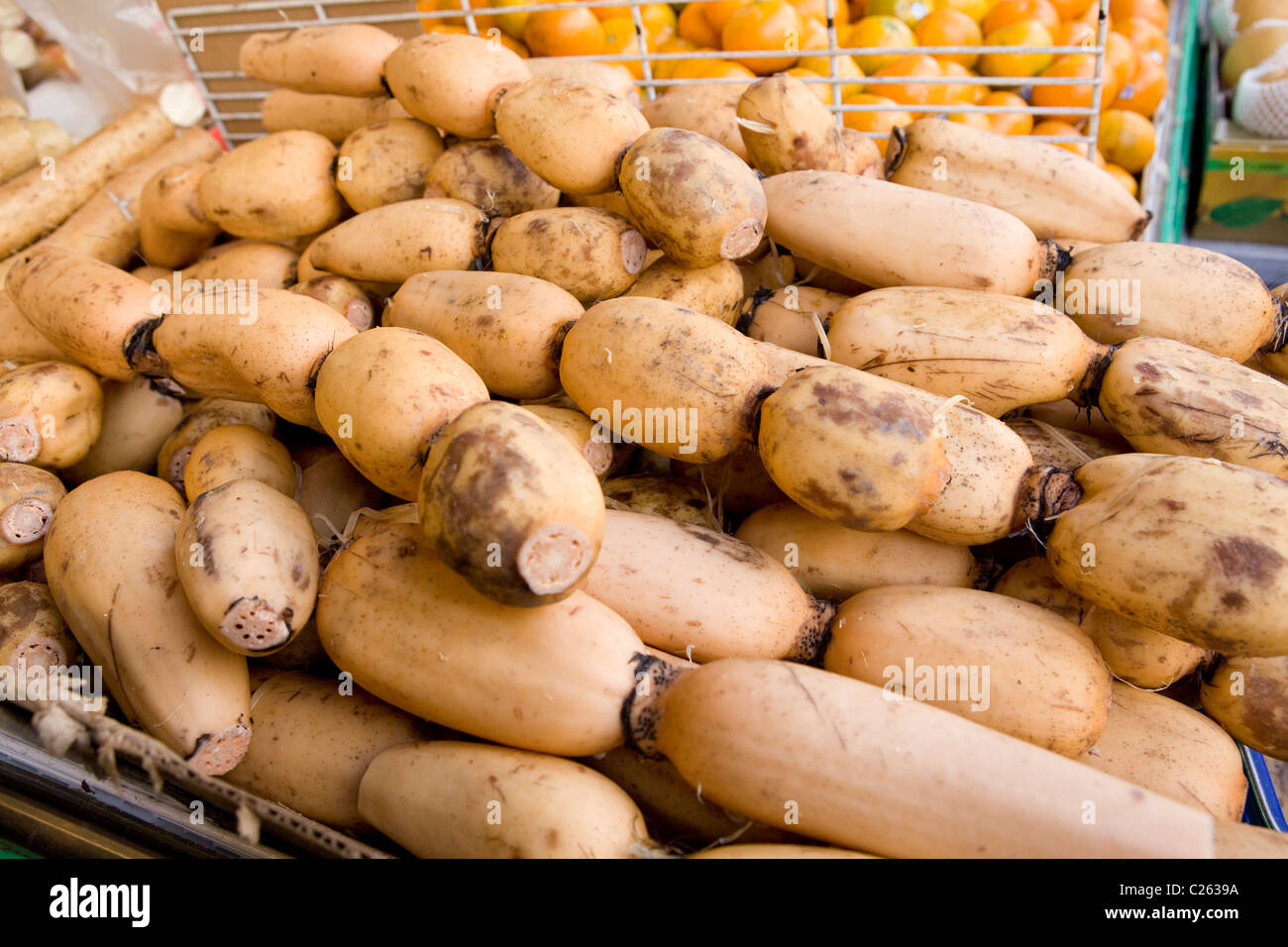 A stack of whole lotus roots - Stock Image